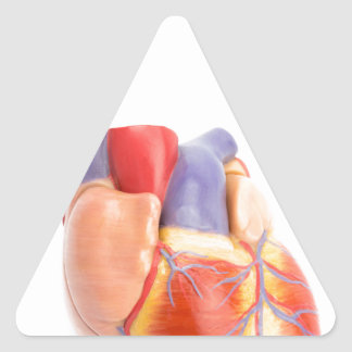 Artificial model of human heart on white.jpg triangle sticker
