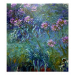 Artistic Agapanthus Fine Art Flowers Posters