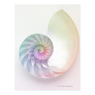 Artistic colored nautilus image postcard