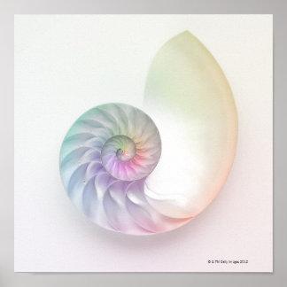 Artistic colored nautilus image poster
