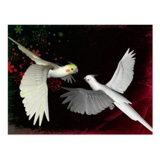 Artistic colorful parrots design postcard