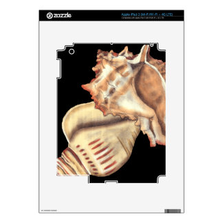 Artistic Conch Shells Decal For iPad 3