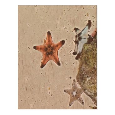 Beach Themed Artistic Neutral Tans Starfish On Sand Postcard