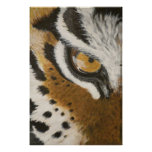 Artistic painted tiger's eye design poster