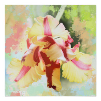 Artistic water colour Parrot Tulip Poster