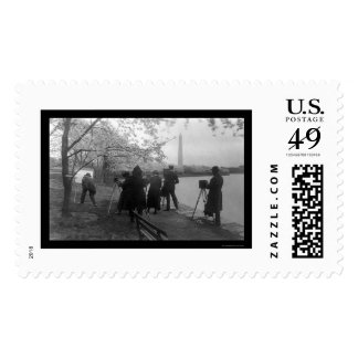 Artists and Cherry Trees in Washington, DC 1920 Stamps