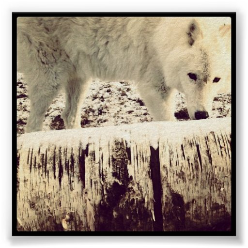 Arturo el lobo póster