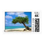 Aruba - árbol de Divi