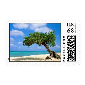 Aruba - árbol de Divi Sellos Postales