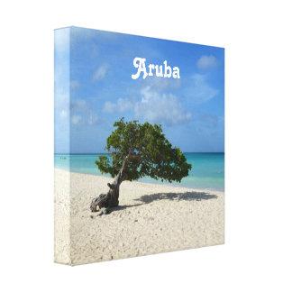 Aruba Divi Divi Tree Gallery Wrap Canvas