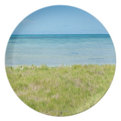 Aruba, grassy beach and sea plate