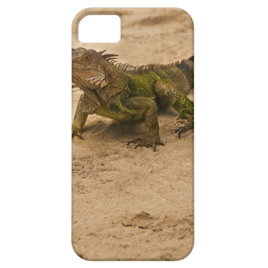 Aruba, lizard on sand iPhone SE/5/5s case