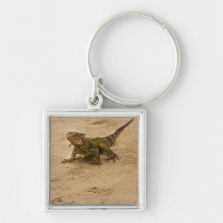Aruba, lizard on sand keychain