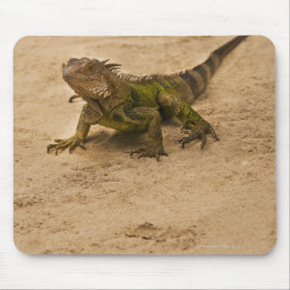 Aruba, lizard on sand mouse pad