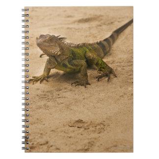 Aruba, lizard on sand spiral note book