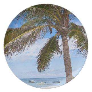 Aruba, palm tree on beach plate