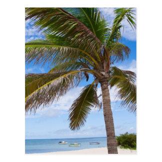 Aruba, palm tree on beach postcard