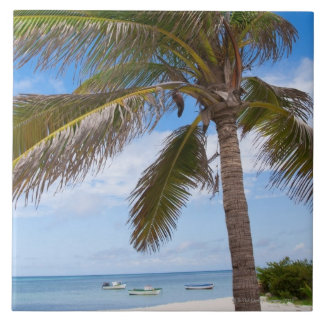 Aruba, palm tree on beach tile