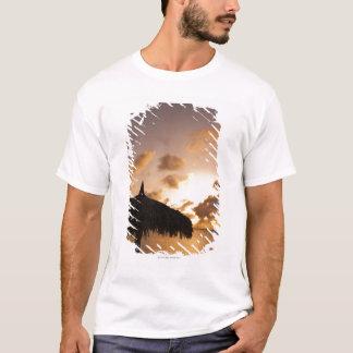 Aruba, silhouette of palapa on beach at sunset T-Shirt