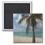Aruban Beach I Beautiful Nature Scene Magnet