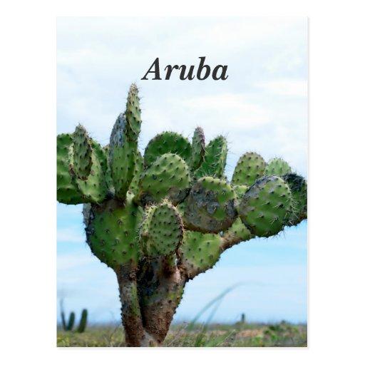 Aruban Cactus Post Cards