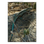 Aruban Whiptail Lizard Tropical Animal Photography Card