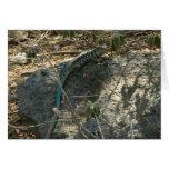 Aruban Whiptail Lizard Tropical Animal Photography Card