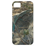 Aruban Whiptail Lizard Tropical Animal Photography iPhone SE/5/5s Case