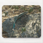 Aruban Whiptail Lizard Tropical Animal Photography Mouse Pad