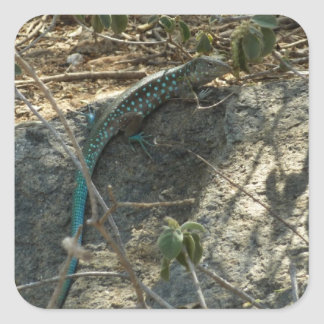 Aruban Whiptail Lizard Tropical Animal Photography Square Sticker