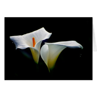 arum lilies card