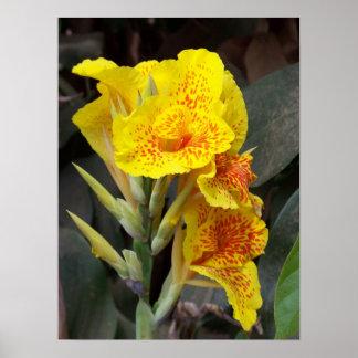 Arusha Yellow Wild Flower Poster