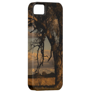As a matter of fact iPhone SE/5/5s case