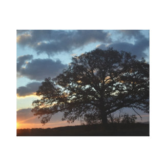 As night falls, a tree stands alone stretched canvas prints