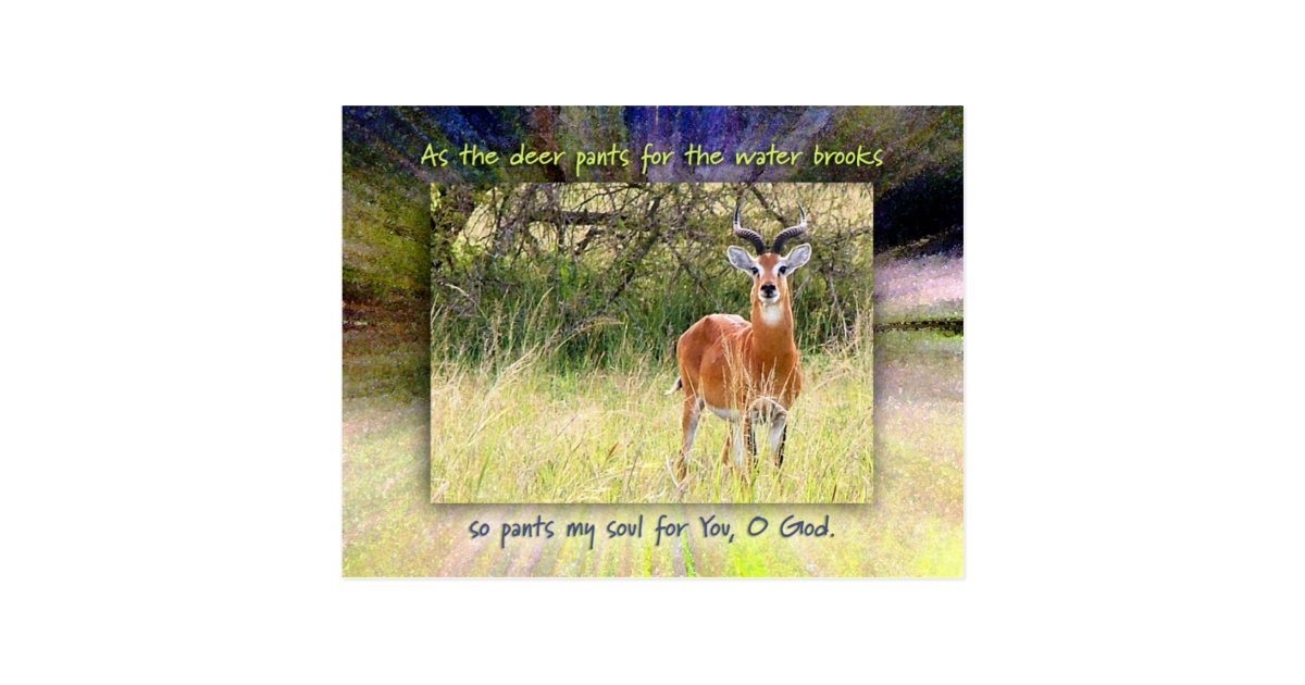 As The Deer Pants For The Water Brooks Postcard