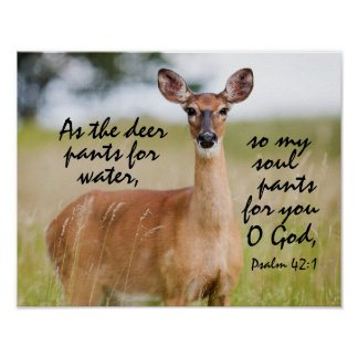 As the deer pants for water Bible Verse Psalm 42:1 Poster