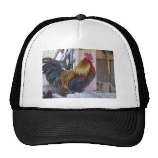 asador gorras