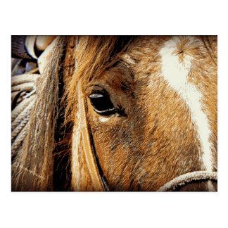 Ascendente cercano del caballo tarjeta postal