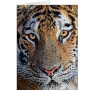 Ascendente cercano del tigre tarjeta de felicitación