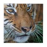 Ascendente cercano del tigre tejas  cerámicas