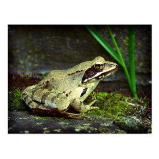 Ascendente cercano/macro de la rana postales