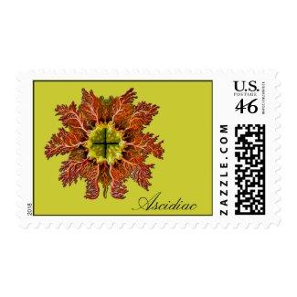 Ascidiac stamp