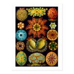 Ascidiacea (ascidias), bella arte de Haeckel Postal
