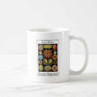 Ascidiae by Ernst Haeckel Coffee Mug