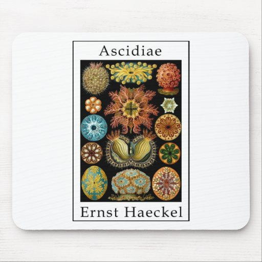 Ascidiae by Ernst Haeckel Mouse Pad