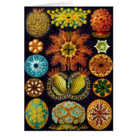 Ascidiae Card