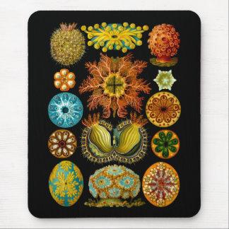 Ascidiae Mouse Pad