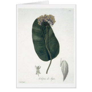 Asclepias Syriaca from 'Phytographie Medicale' by Card
