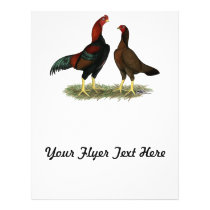 Aseel Black Red Chickens Flyer