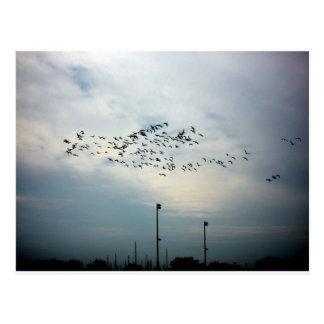 Asesinato de cuervos tarjeta postal